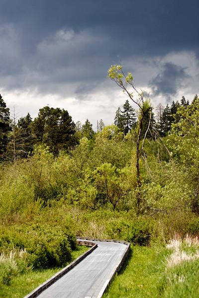 Deer Lake Park, Burnaby BC, May 23, 2010.