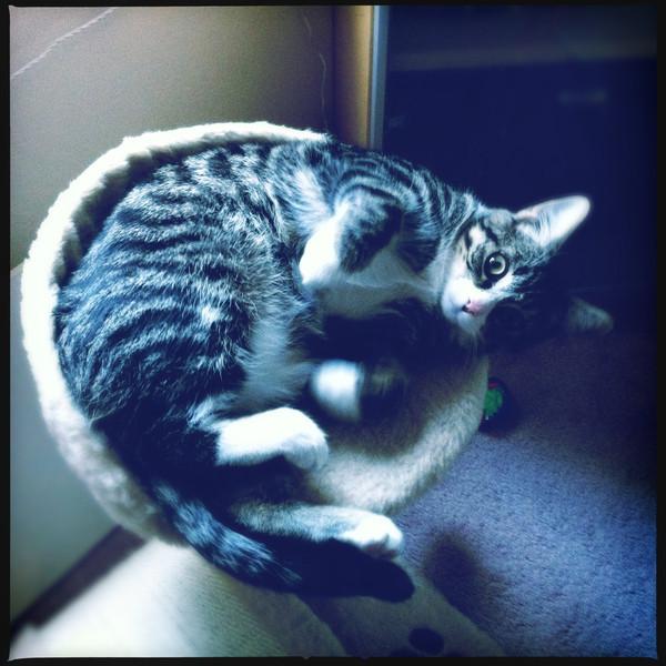 Chili the cat. February 15, 2012.