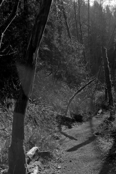 Moskva-5 photos from Minnekhada Regional Park, Coquitlam BC, March 6, 2010.