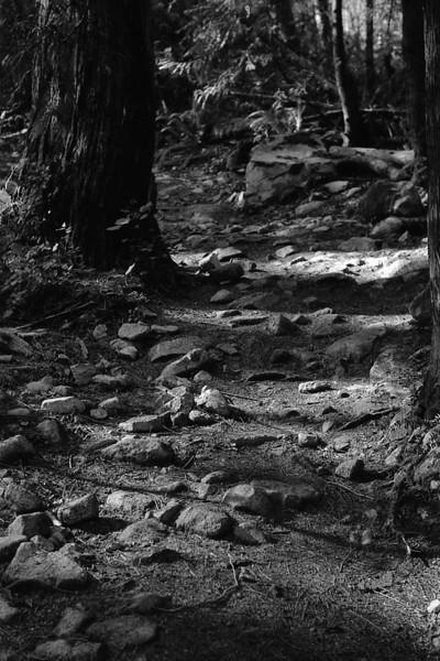 Zorki 6 photos from Minnekhada Regional Park, Coquitlam BC, March 6, 2010.