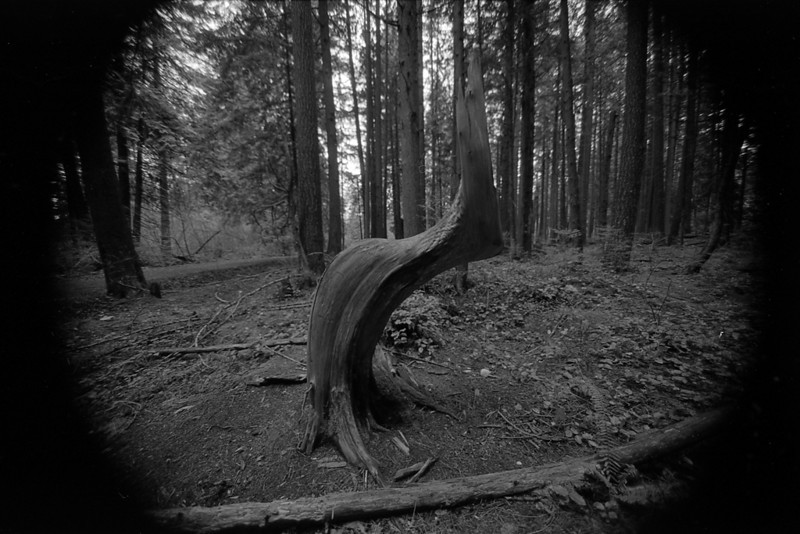 Mundy Park, Coquitlam BC, March 2010. Shot with a Tokina 11-16 f/2.8 lens.