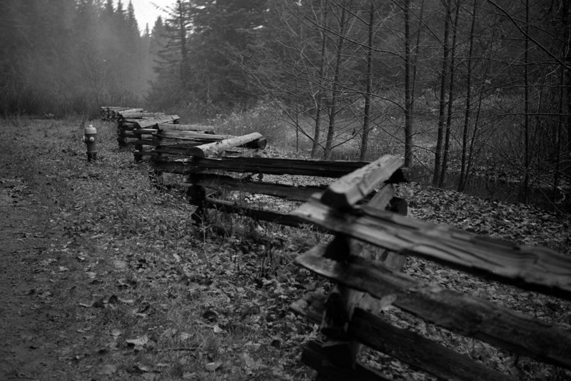 Mundy Park, Coquitlam, November 29, 2009. Test roll for Graflex Century Graphic, Ilford HP5 , ISO 1600, XTOL 1:1, 20 minutes.