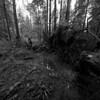 Mundy Park, Coquitlam BC, November 7, 2010. Defished with DxO Optics at correction factor 85.