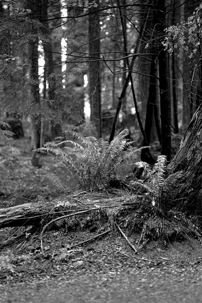 Mundy Park, Coquitlam BC, September 19, 2010.<br /> <br /> Shot with an Olympus OM-4Ti, Tamron 90mm f/2.5 Macro and Arista Premium 400 film.