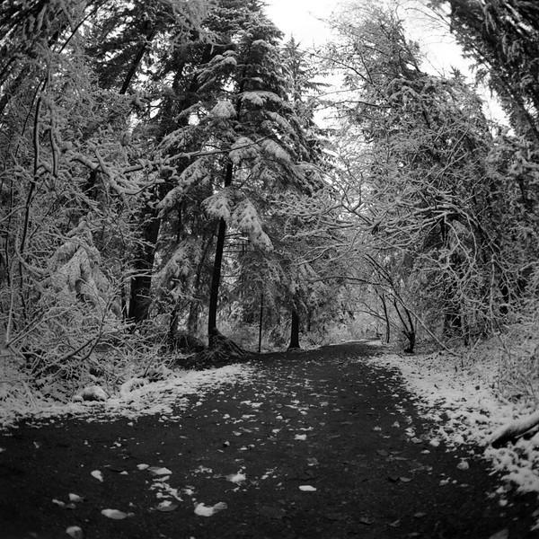 Mundy Park, Coquitlam BC, November 27, 2010.