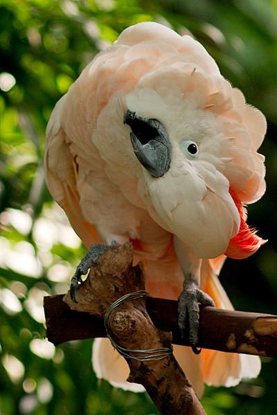Queen Elizabeth Park, August 23, 2009.<br /> <br /> Loud crazy bird doing loud crazy bird things.
