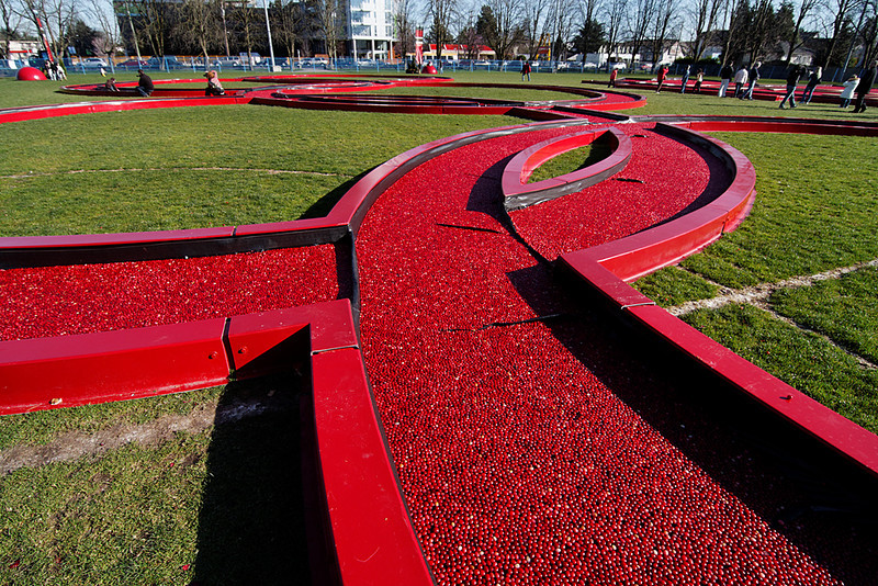 Cranberry-filled Olympic rings, Brighouse Park, Richmond, BC, February 21, 2010.