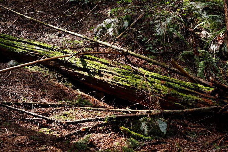 Ridge Park, Coquitlam BC, April 25, 2010