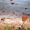 Deer and fawn! Must have smelt the good food.
