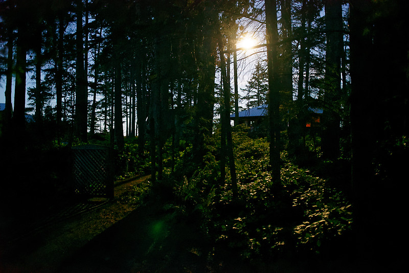 Moonilght through the trees.