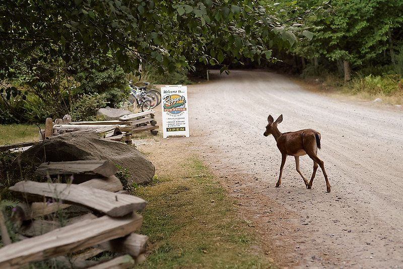 When the weather is hot and dry, the deer know just where to go for a cold drink.