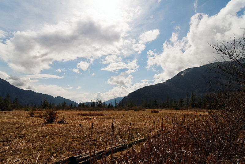 Squamish estuary, Squamish BC, April 16, 2011.