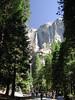 Yosemite Falls Upper + Lower  1