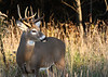 The Forest Preserves at 159th & Pulaski proved to be great for bucks this fall.