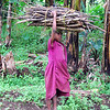 Small children gather and carry firewood to their homes.