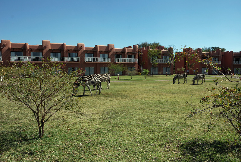 The hotel bordered a national park and there were no fences, so animals came and went as they pleased.