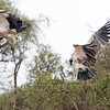 Vultures hanging out near the water hole