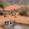 Dry season forces animals to congregate at whatever water source they can find.