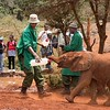 Next up was the Sheldrick Elephant Orphanage.  The public is allowed to visit the orphans for 1 hour each day as the youngsters get their milk and  play in the mud.
