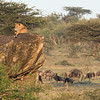 We watched this lioness scale the cliff to get to this great perch.