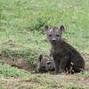 Back at the hyena den....