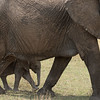 We left the cheetahs and found this tiny elephant sticking very close to mom.
