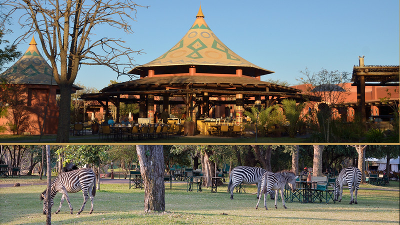 We were then driven to the Zambezi Sun Hotel.  The hotel grounds are full of animals, but the best part is the hotel location - just feet from Victoria Falls.  It was a nice 1-night break between bush camps.