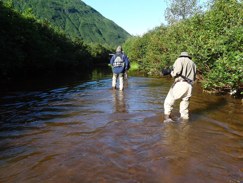 This was a genuine Alaska experience.  The water was cold and clear.  If we'd been just a few weeks later, this stream would have been lined with bears.