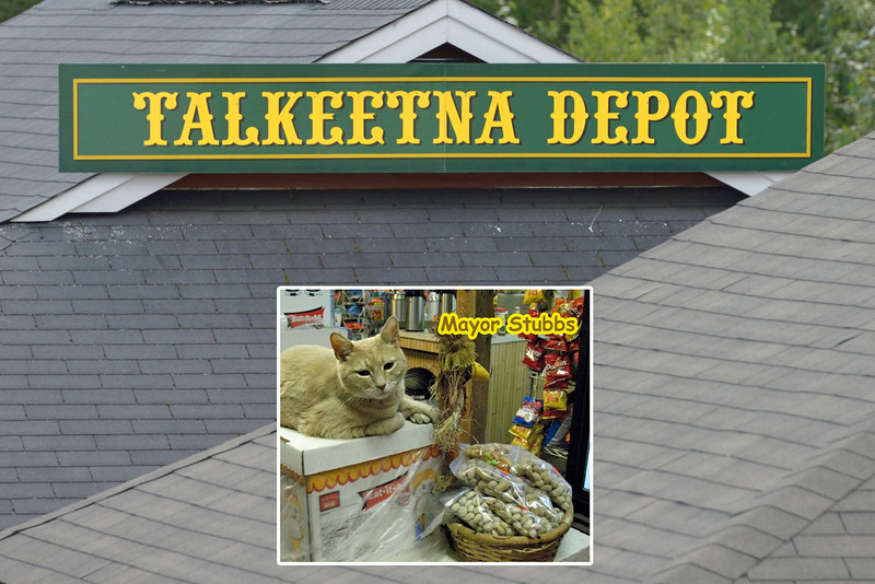 We made a brief stop in Talkeetna.  The cat in the inset photo is the mayor here.  Apparently, the good citizens of Talkeetna were fed up with local government and elected Stubbs in a landslide write-in vote.  He's been mayor for nearly 15 years.<br /> <br /> We also passed through Wasilla.  It was a bit overcast when we arrived, so, unlike Sara Palin, we couldn't see Russia.