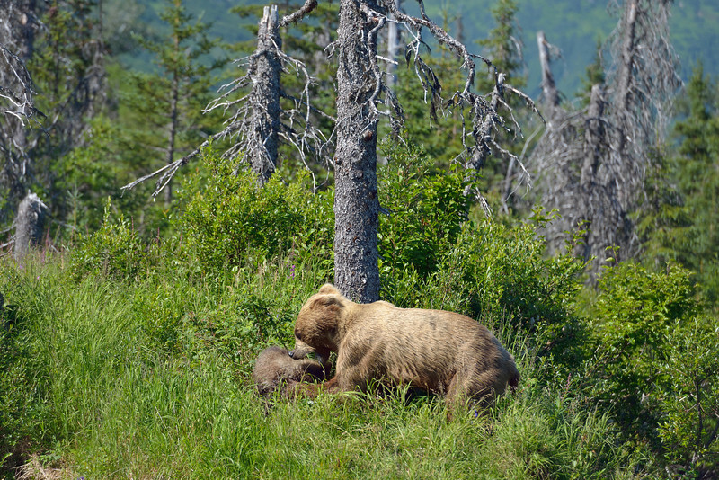 Eventually mom relaxed long enough to share a tender moment with her cub.