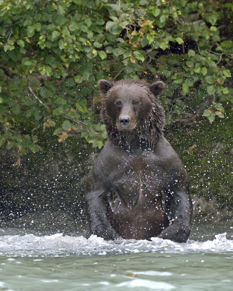 We found this bear fishing on our way back to the lodge for the last time.