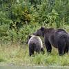 Now both bears went on alert.