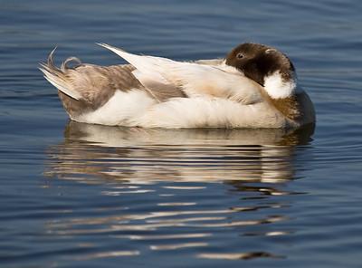 Baylands Birds 2008.05.04