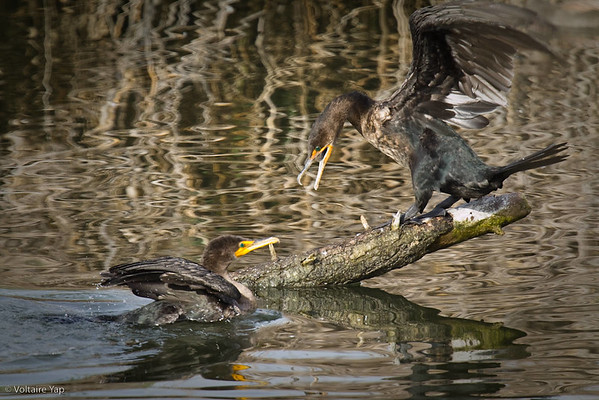 Fall 2009 Birds