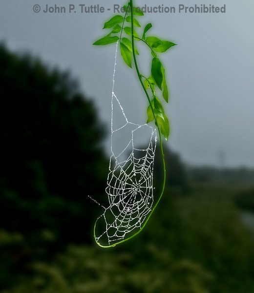 Spiderweb Flat