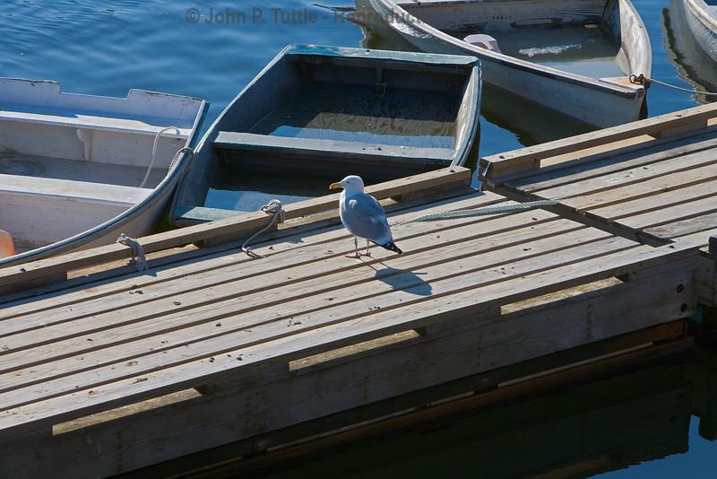 Seagulls in Perkins Cove 1