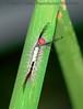 Caterpillar flat