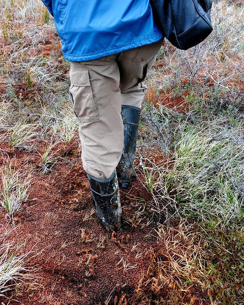 """Early into the hike, we figured out where the phrase """"bogged down"""" originated.  It was very difficult to walk through this spongy stuff."""