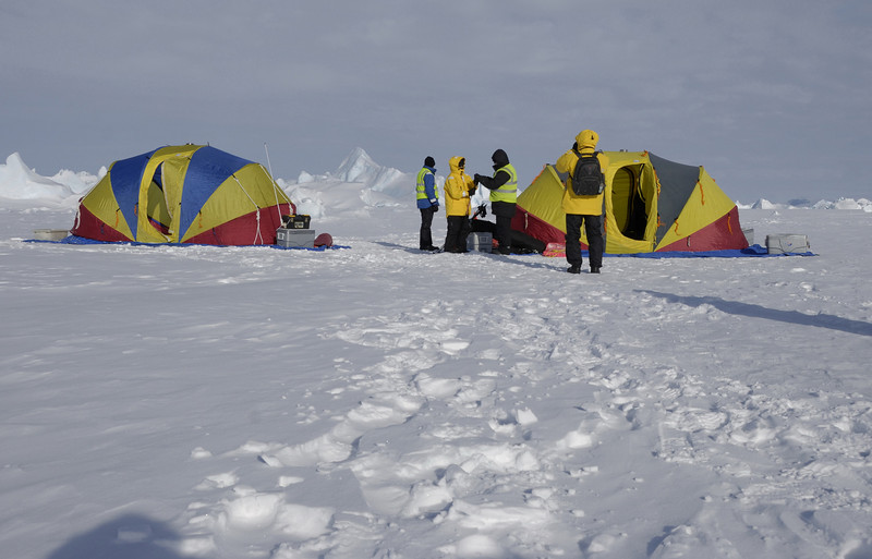 Our base camp about 1 mile from the rookery.  These tents are set up in the morning and taken down at night.