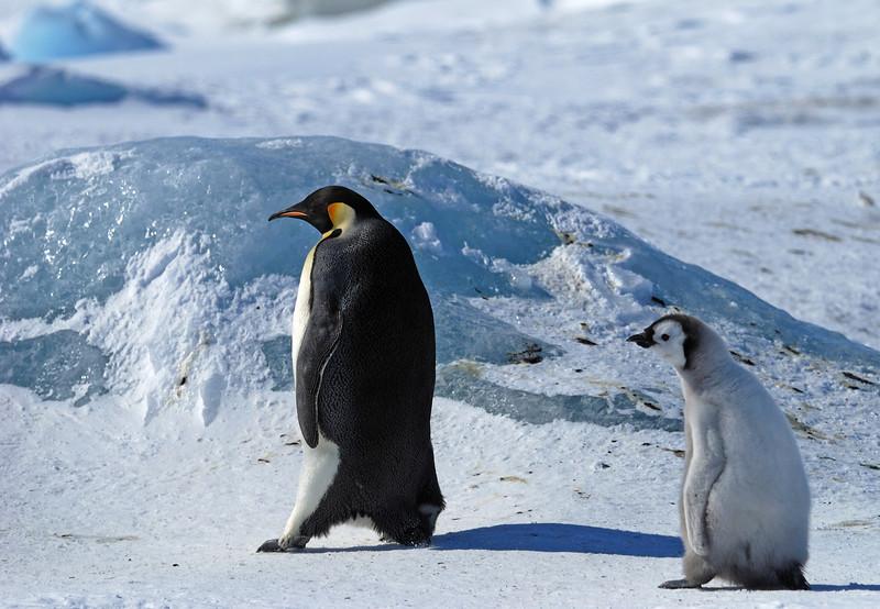 Walk this way, son.