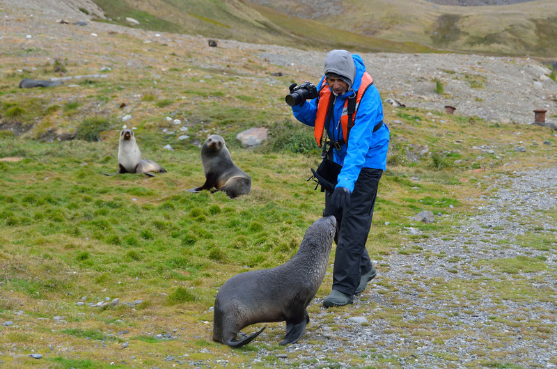 Of course, we had the fur seal problem on the way.