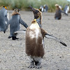 I'm a penguin and proud of it!