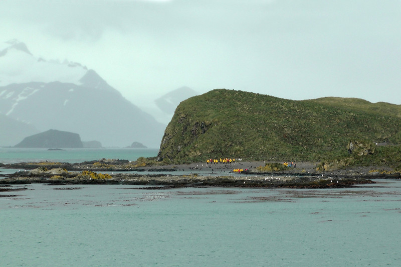 Next up - Prion Island. It's one of the few rat-free tussac islands along the rat-infested coastline of South Georgia. The government is currently embarked upon a comprehensive rat-eradication project. Prion Island is an early success. This is home to nesting wandering albatross who wouldn't survive here with rats. Access to Prion Island is strictly limited, so we were very fortunate to be able to visit.