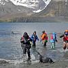 Fending off a fur seal.