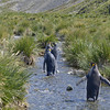 We had to wait for the penguins to leave before crossing the stream.