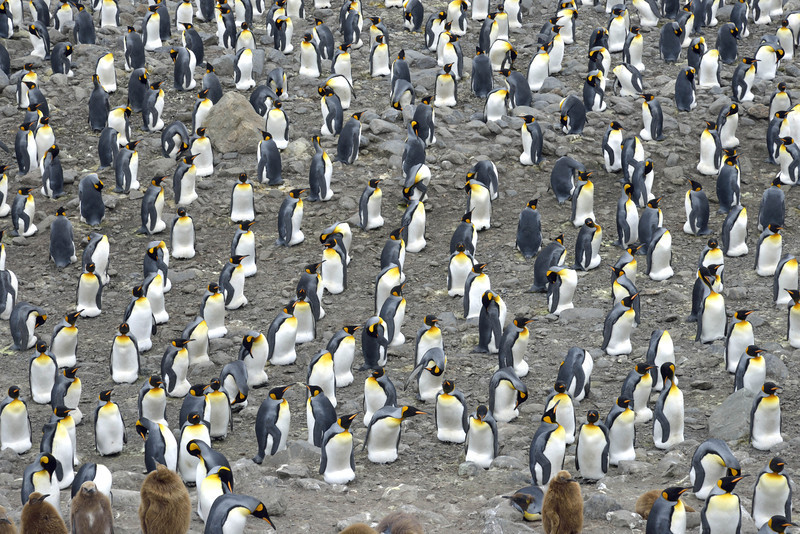 All these penguins have eggs on their feet.