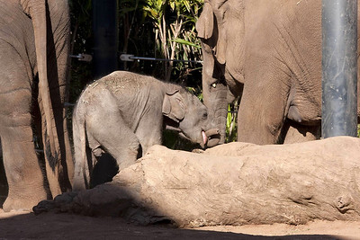 Biting his trunk