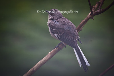 Mocking Bird deals with a wet and foggy day.