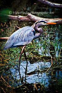 Audobon Swamp, Charleston, SC