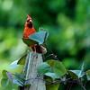 Saylorville Butterfly Garden 8-4-14 066
